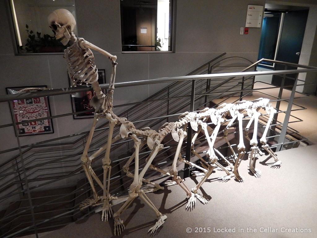 Human Caterpillar Skeleton